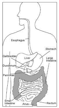 730489 Hiểu biết về bệnh polyp đại tràng