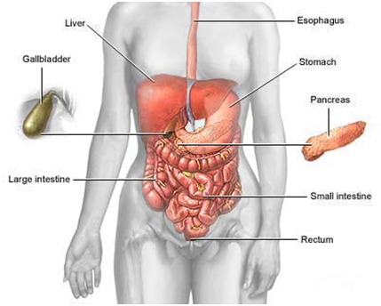 741090 Những triệu chứng cơ bản của hội chứng ruột kích thích