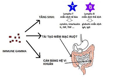 tb13 ImmuneGamma®: Lối ra cho căn bệnh đại tràng