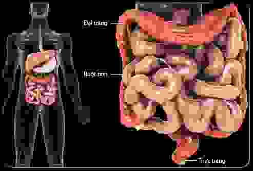 dai trang1 Phát hiện sớm, điều trị và phòng ngừa ung thư đại tràng trực tràng