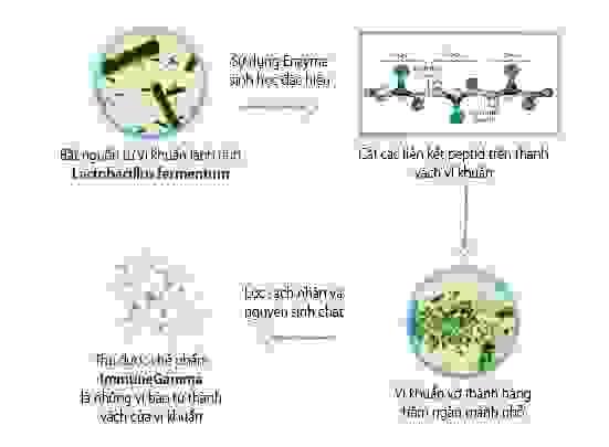 Quy trình chế biến ImmuneGamma