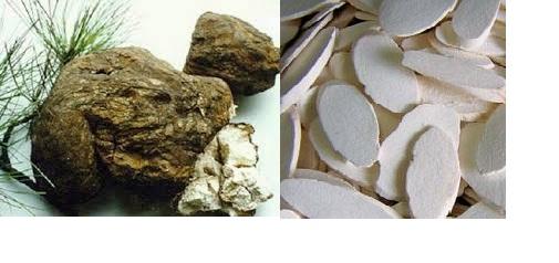 Huyền thoại về loài nấm quý hơn vàng 1
