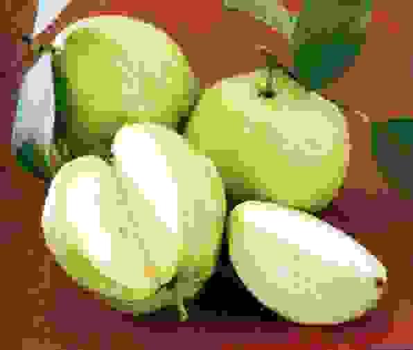 Rối loạn tiêu hóa ăn gì kiêng gì? 1